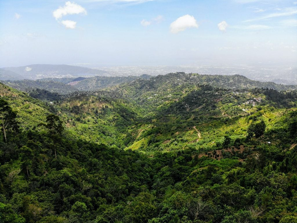 Jamaican blue mountains